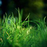 Graszoden kopen of toch zaadjes planten